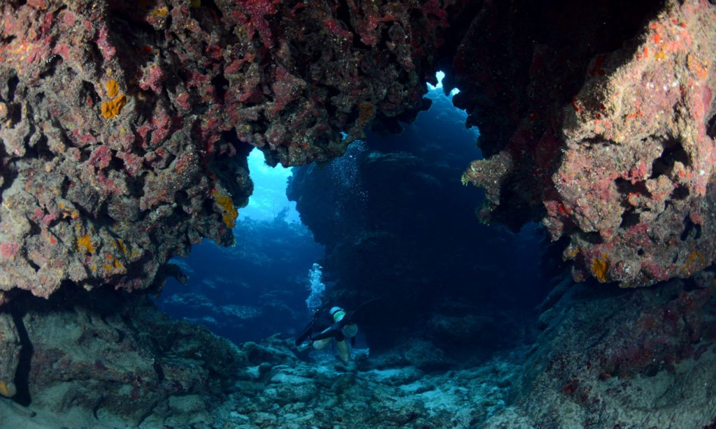 Look! Scuba Diver's Portal to the Underwater World
